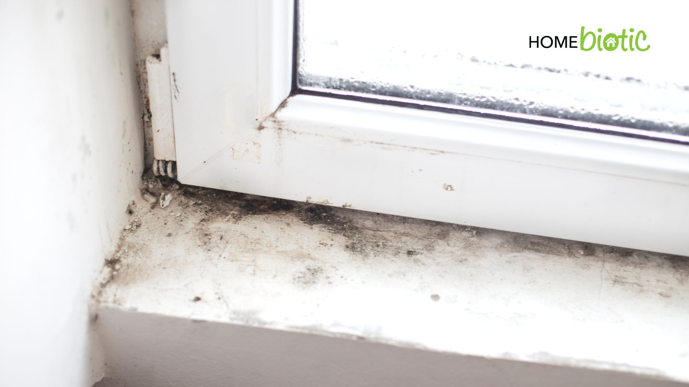 Can Mold Exposure Increase Your Coronavirus Risk? | Mold growing on a window sill